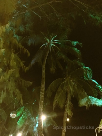 NightTreesSC